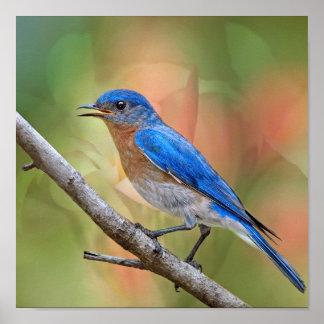 Sr. Beautiful Bluebird Poster