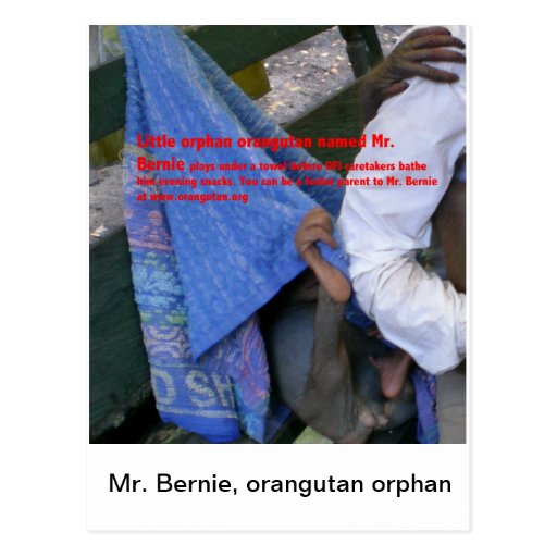 Sr. Bernie, orangután OFI huérfano Postales