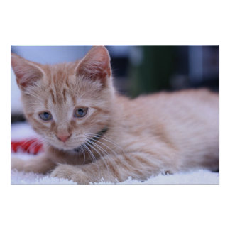 Sr. Cat Póster