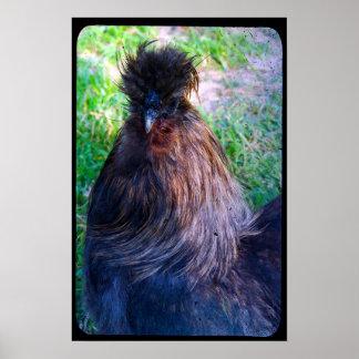 Sr. Fluffy el gallo de Silkie Poster