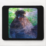 Sr. Fluffy el gallo de Silkie Alfombrilla De Ratones