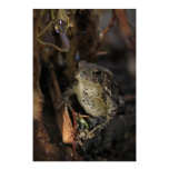 Sr. Frog Posters