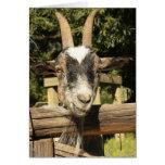 Sr. Goat Tarjetas