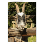 Sr. Goat Tarjetón