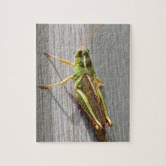Sr. Grasshopper Puzzle
