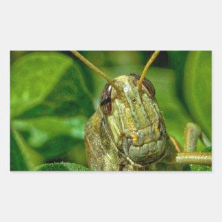 Sr. Green Rectangular Pegatina