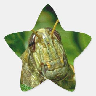 Sr. Green Calcomania Forma De Estrella