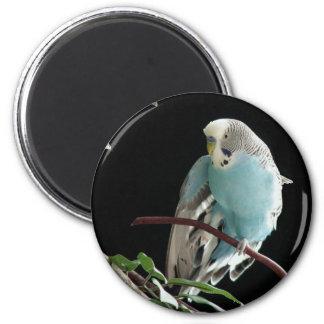 Sr. Jill Budgie Round Magnet Imán Redondo 5 Cm