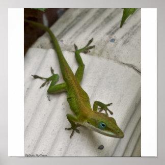 Sr. Lizard Impresiones