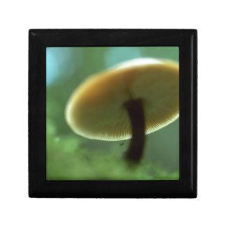 Sr. Mushroom de la reserva de naturaleza Caja De Joyas