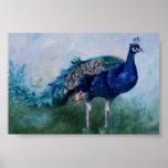 Sr. Peacock Poster