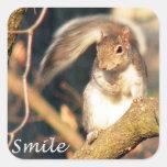 Sr. Squirrel Sticker de la sonrisa Calcomanías Cuadradass