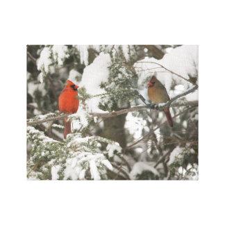 Sr. y señora Cardinal Impresion En Lona