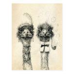 Sr. y señora Ostrich