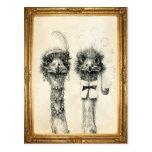 Sr. y señora Ostrich enmarcada Postal