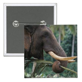 Sri Lanka, Elephant feeds at Pinnewala Elephant 2 Button