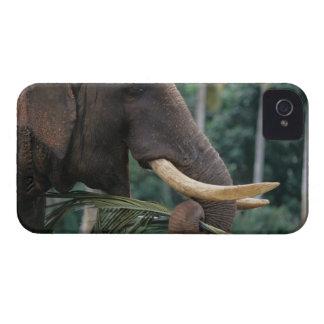 Sri Lanka, Elephant feeds at Pinnewala Elephant 2 iPhone 4 Case