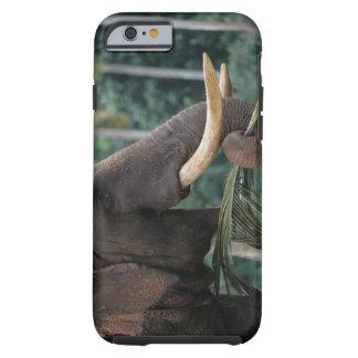 Sri Lanka, Elephant feeds at Pinnewala Elephant 2 Tough iPhone 6 Case