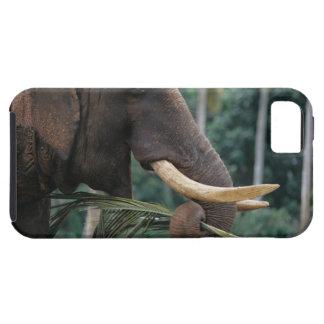 Sri Lanka, Elephant feeds at Pinnewala Elephant 2 iPhone 5 Case