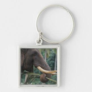 Sri Lanka, Elephant feeds at Pinnewala Elephant 2 Keychains