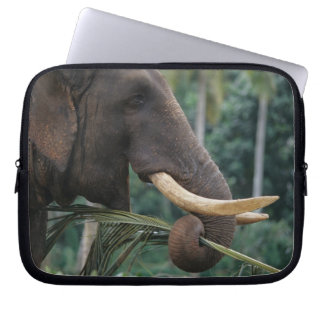 Sri Lanka, Elephant feeds at Pinnewala Elephant 2 Computer Sleeve