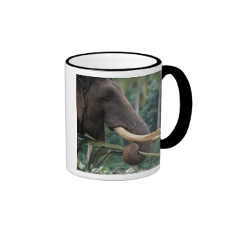 Sri Lanka, Elephant feeds at Pinnewala Elephant 2 Ringer Coffee Mug