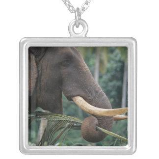 Sri Lanka, Elephant feeds at Pinnewala Elephant 2 Pendant