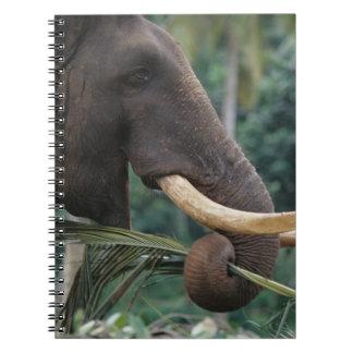 Sri Lanka, Elephant feeds at Pinnewala Elephant 2 Spiral Notebooks