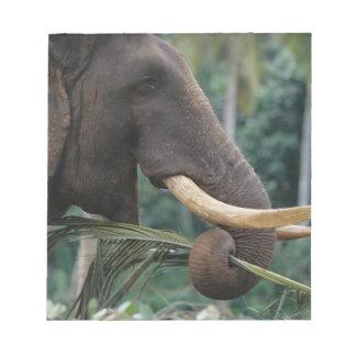 Sri Lanka, Elephant feeds at Pinnewala Elephant 2 Memo Note Pad