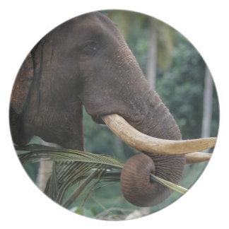 Sri Lanka, Elephant feeds at Pinnewala Elephant 2 Party Plates
