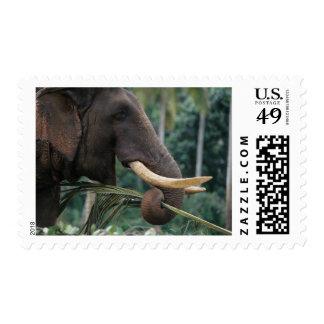 Sri Lanka, Elephant feeds at Pinnewala Elephant 2 Stamps