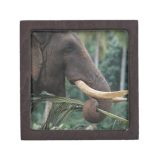 Sri Lanka, Elephant feeds at Pinnewala Elephant 2 Premium Keepsake Box