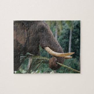 Sri Lanka, Elephant feeds at Pinnewala Elephant 2 Jigsaw Puzzles