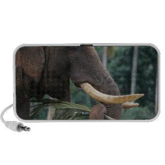 Sri Lanka, Elephant feeds at Pinnewala Elephant 2 iPod Speakers