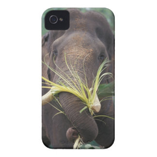 Sri Lanka, Elephant feeds at Pinnewala Elephant iPhone 4 Covers