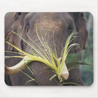Sri Lanka, Elephant feeds at Pinnewala Elephant Mouse Pad