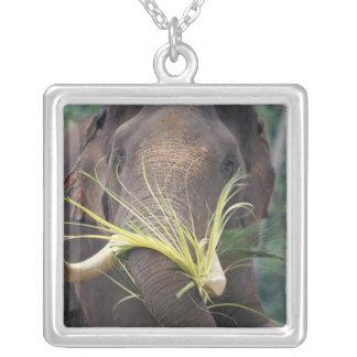 Sri Lanka, Elephant feeds at Pinnewala Elephant Jewelry