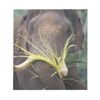 Sri Lanka, Elephant feeds at Pinnewala Elephant Memo Note Pads