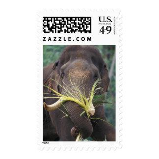 Sri Lanka, Elephant feeds at Pinnewala Elephant Postage Stamp