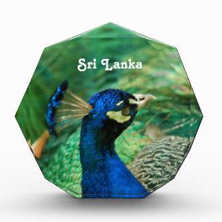 Sri Lanka Peafowl Award