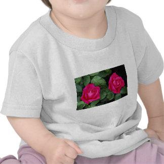 Srta. All american Beaut del rosa de té híbrido he Camiseta