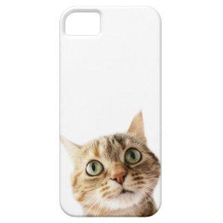 Srta. Cattitude de Lil iPhone 5 Coberturas