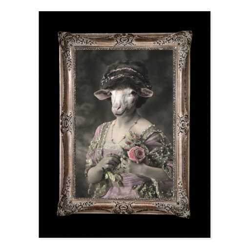 Srta. real Sheep Framed Portrait Postcard Postales
