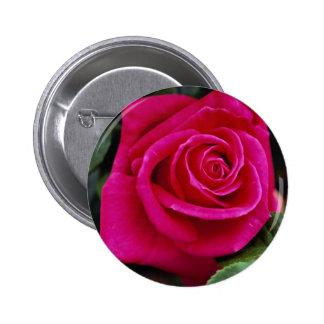 Srta. Todo-americano Beaut del rosa de té híbrido  Pins