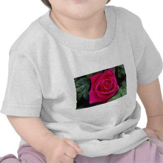 Srta. Todo-americano Beaut del rosa de té híbrido Camiseta