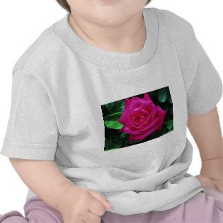 Srta. Todo-americano Beaut del rosa de té híbrido Camisetas