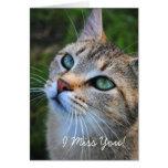 Srta. You Card de la fotografía I del gato de Tabb Tarjetas