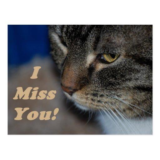 Srta. You Postcard del gato I del gatito Tarjeta Postal