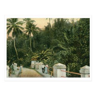 St. Andrew, Tom's River Bridge, Jamaica Vintage Postcard