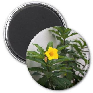 St. Augustine Flower 2 Inch Round Magnet
